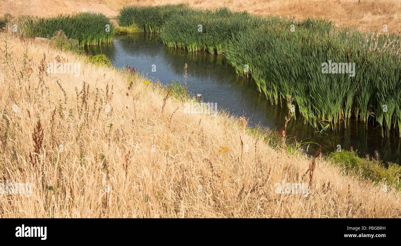 A shrinking wetland habitat under threat during the UK summer heatwave Stock Photo