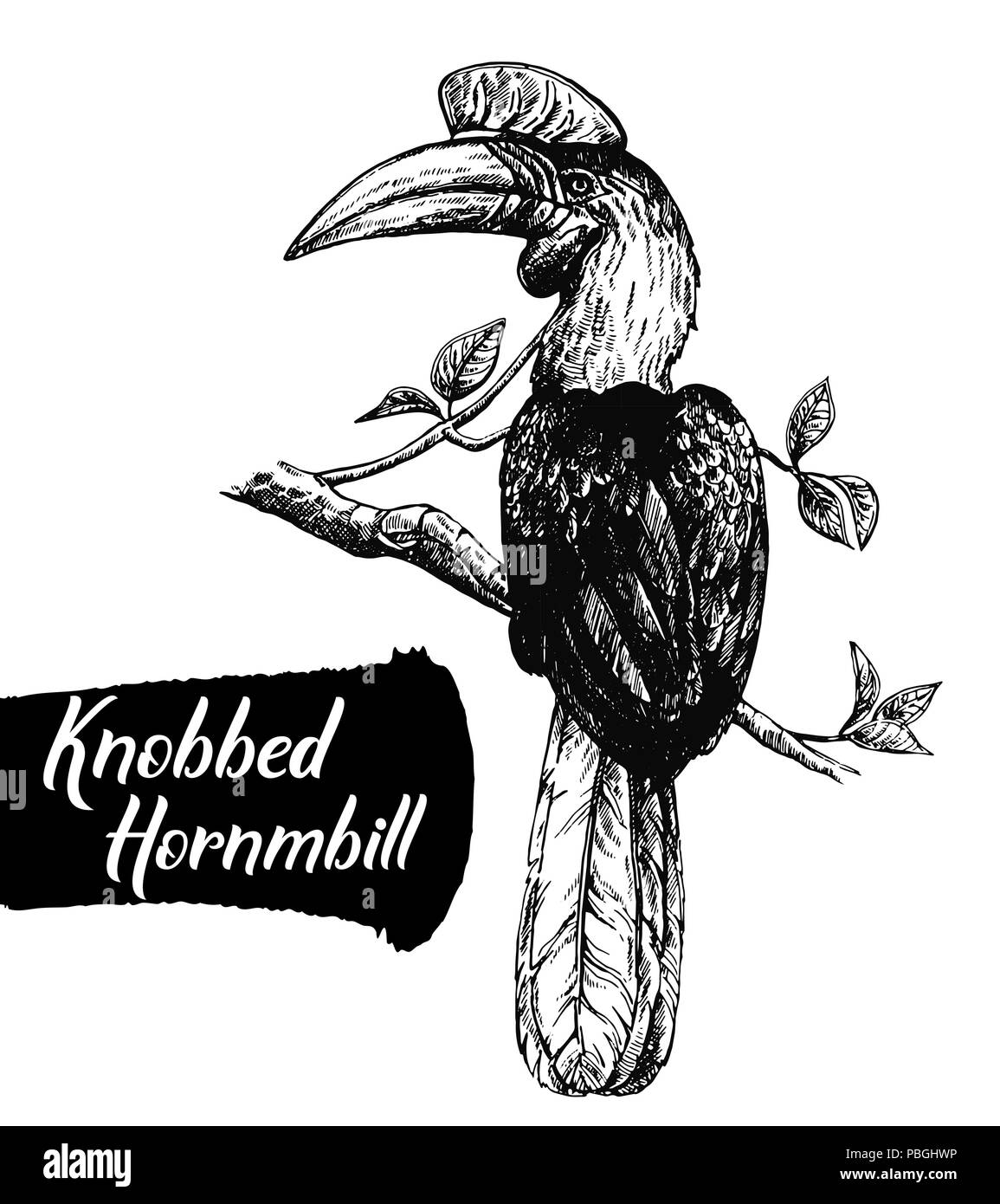 Hand drawn sketch style knobbed hornbill isolated on white background. Vector illustration. - Stock Image
