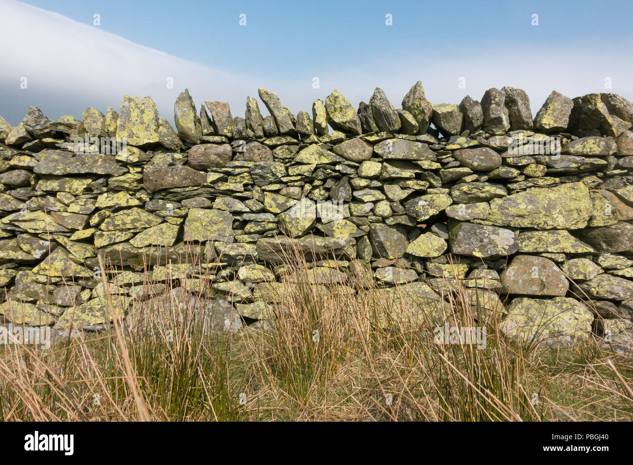 dry stone wall covered with lichen in the Lake District, England, uk - Stock Image