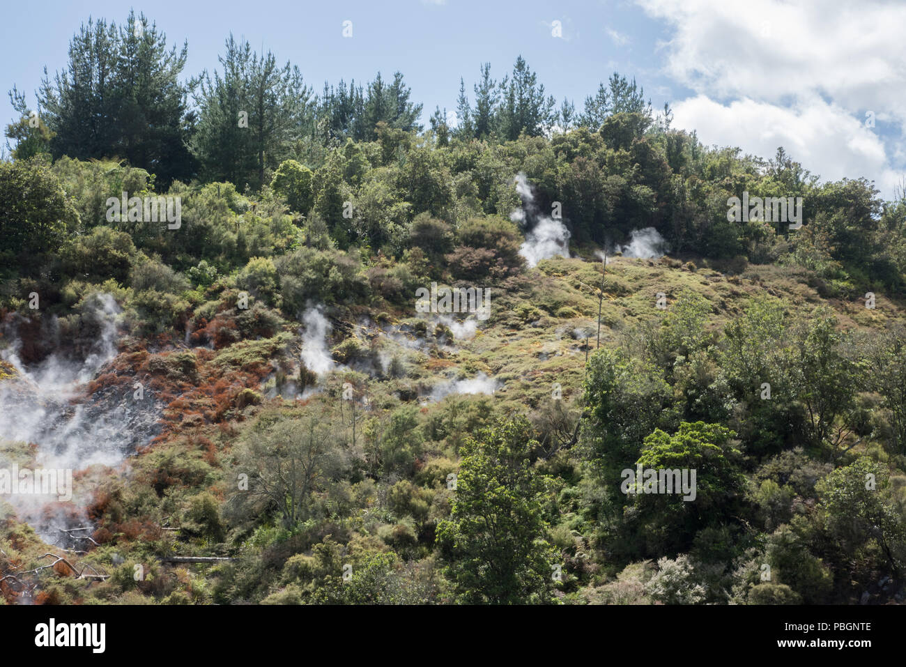 Steaming fumaroles in the lush forest at Orakei Korako geothermal area in Rotorua, New Zealand - Stock Image