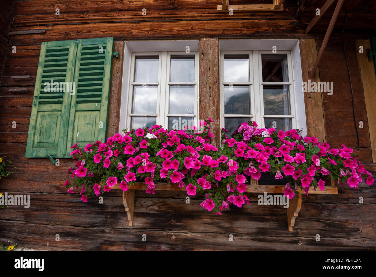 Colorful flowers in window boxes on an alpine cottage at Murren mountain village, Jungfrau mountain range area, Switzerland Alps, Bernese Oberland - Stock Image