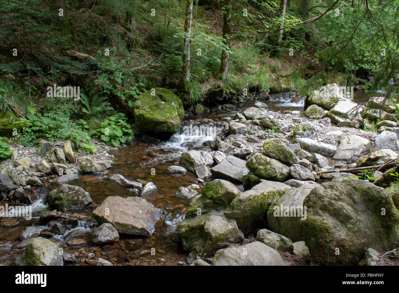 stream in the Black Forest - Stock Image