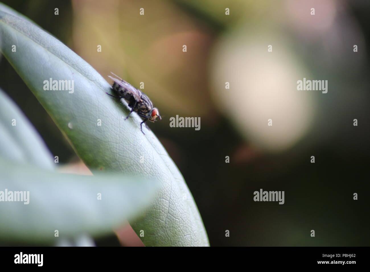 Fliege auf dem absteigenden Blatt Stock Photo