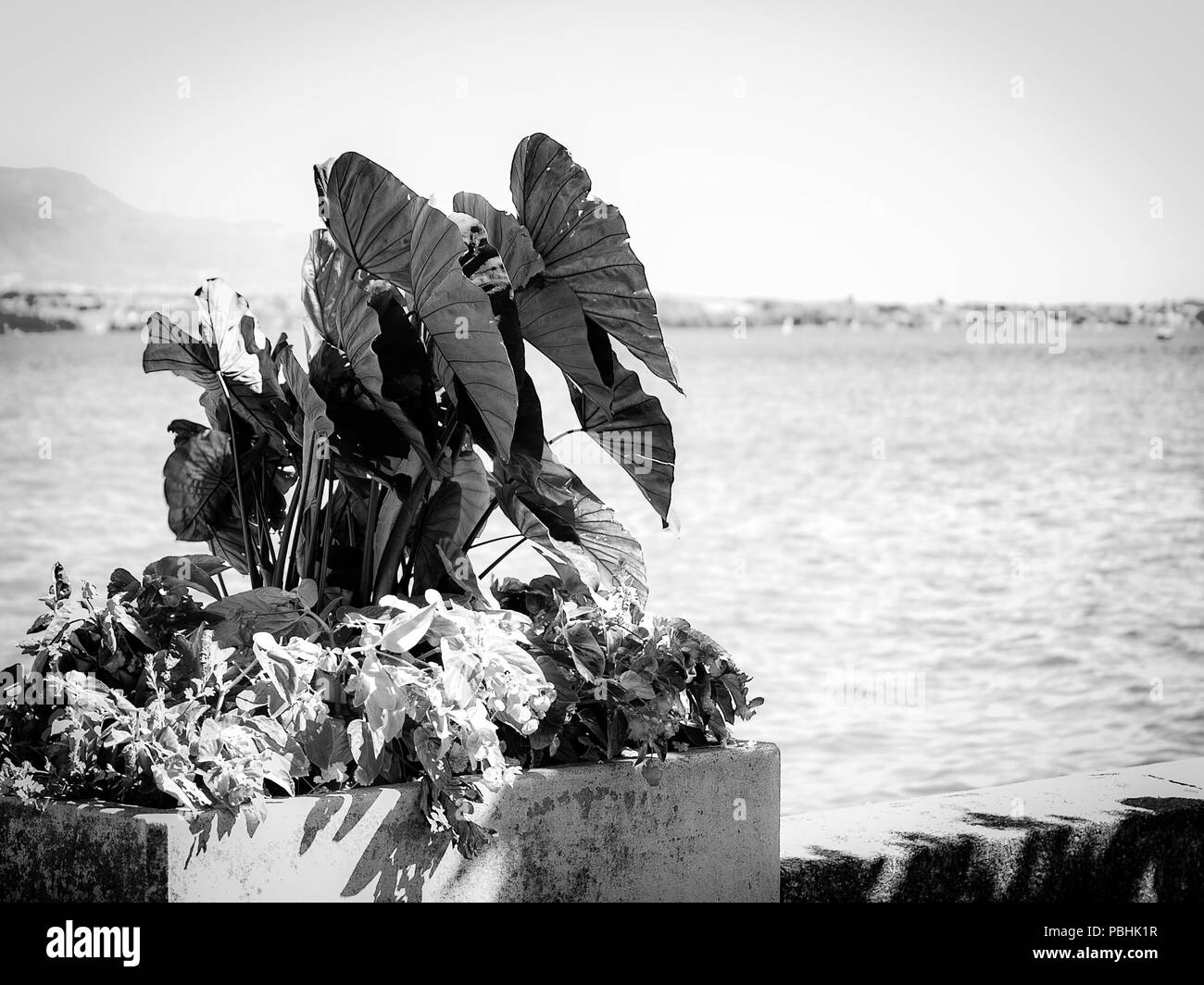 Flower pot on lakeside with Leman lake on a background. - Stock Image