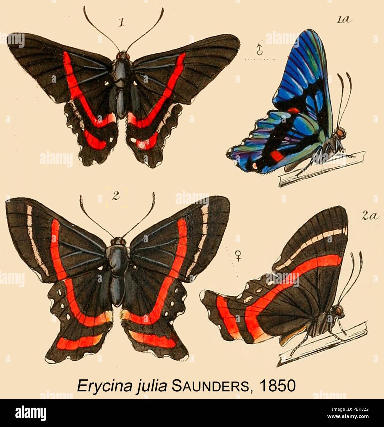 848 JuliaSaunders1850OD - Stock Image