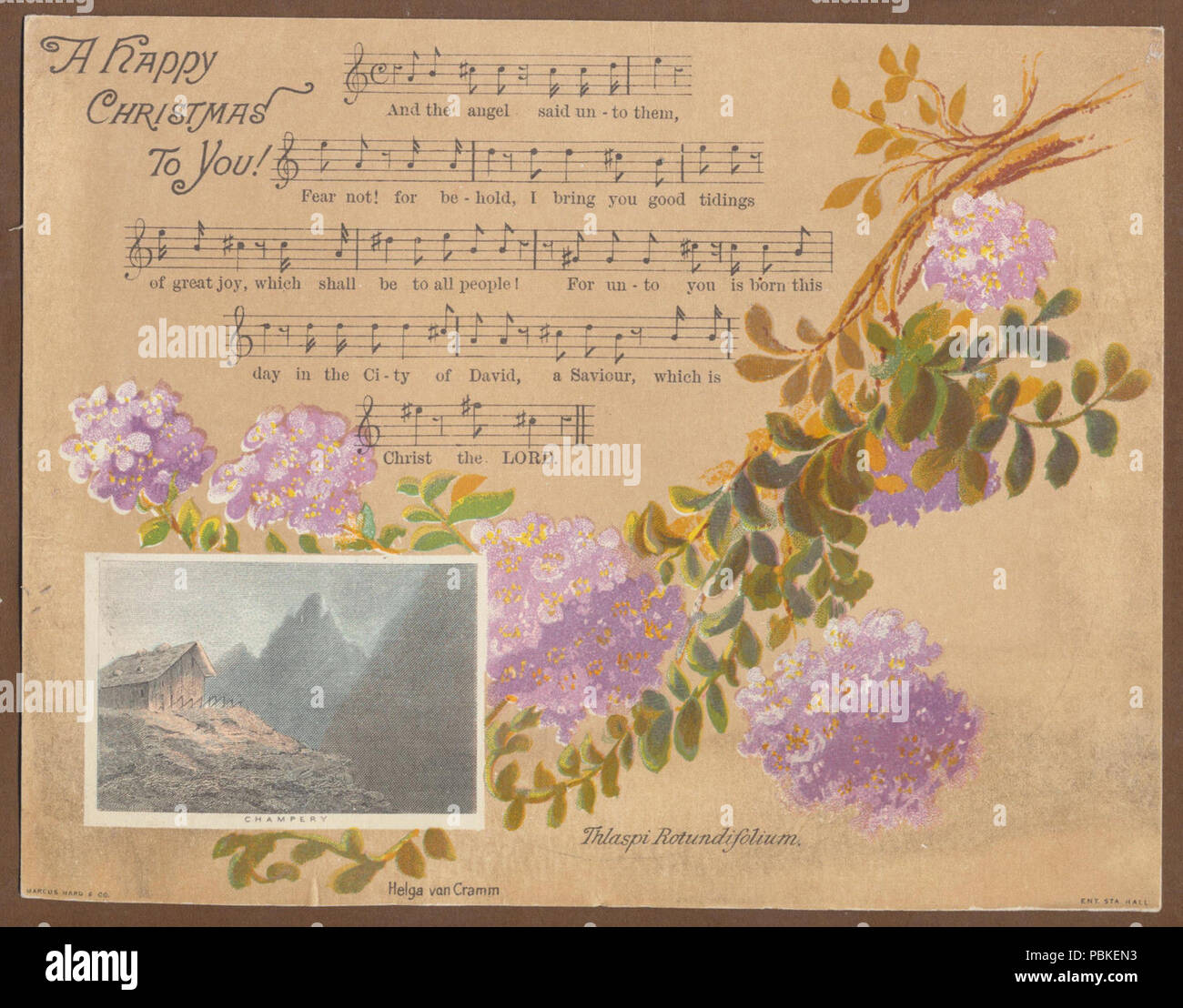 751 Helga von Cramm, Thlaspi Rotundifolium, published by Marcus Ward & Co., Champery. Chromolithographic Christmas card. Higher res - Stock Image