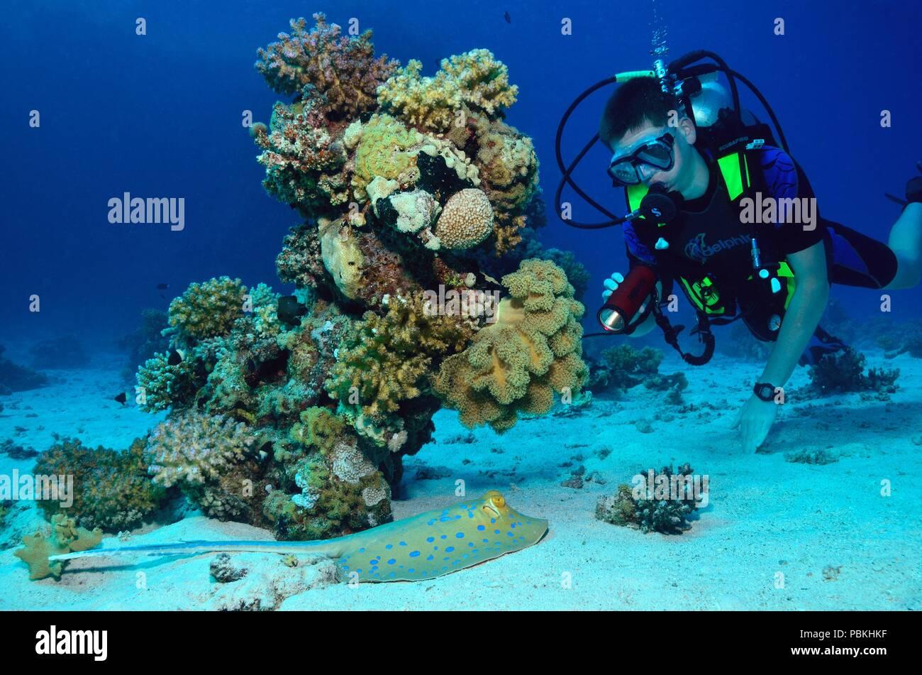Blaupunkt Stock Photos & Blaupunkt Stock Images - Alamy