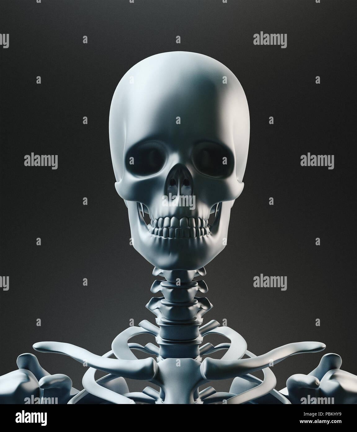 Human skeleton, body bones, 3d render illustration Stock
