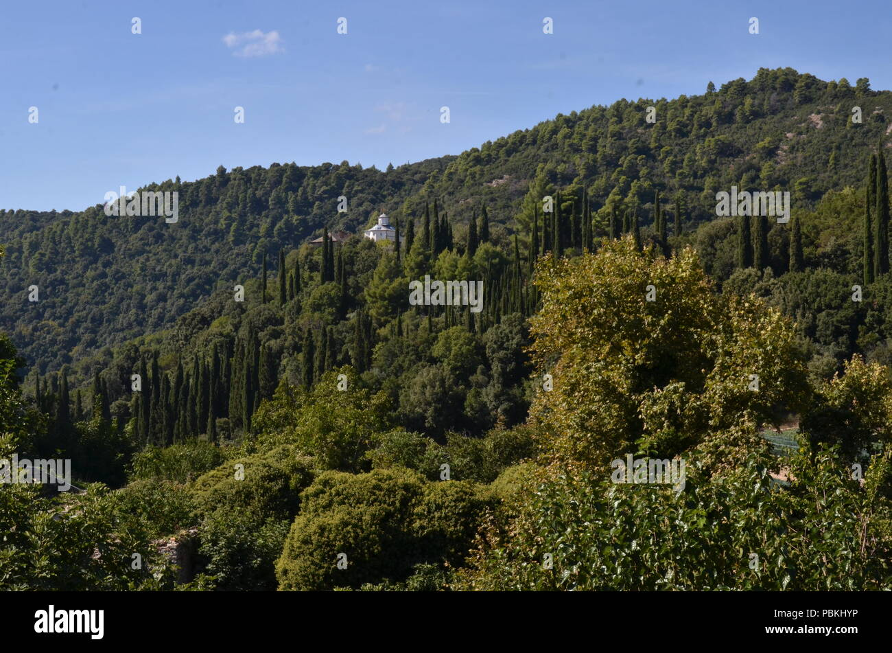 Coniferous forest in a sunny day in Greece - Stock Image