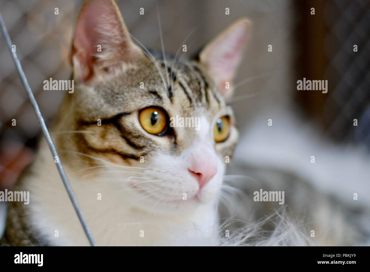 Lovely cat at home - Stock Image