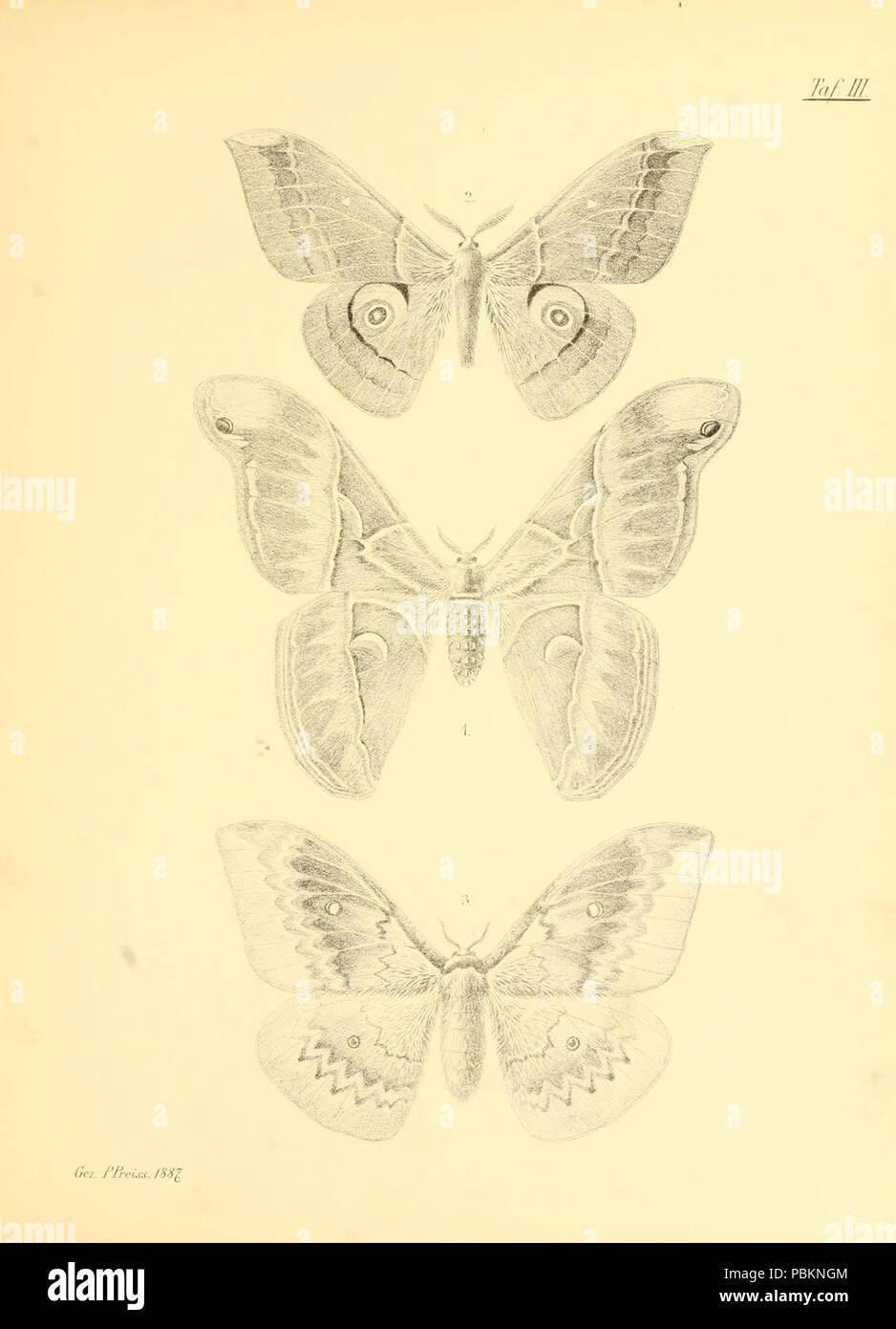 Abbildungen hervorragender Nachtschmetterlinge aus dem indo-australischen und südamerikanischen Faunengebiet (Taf. III) - Stock Image