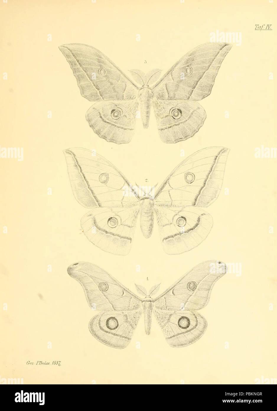 Abbildungen hervorragender Nachtschmetterlinge aus dem indo-australischen und südamerikanischen Faunengebiet (Taf. IV) - Stock Image