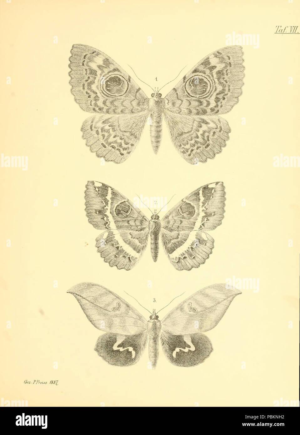 Abbildungen hervorragender Nachtschmetterlinge aus dem indo-australischen und südamerikanischen Faunengebiet (Taf. VII) - Stock Image