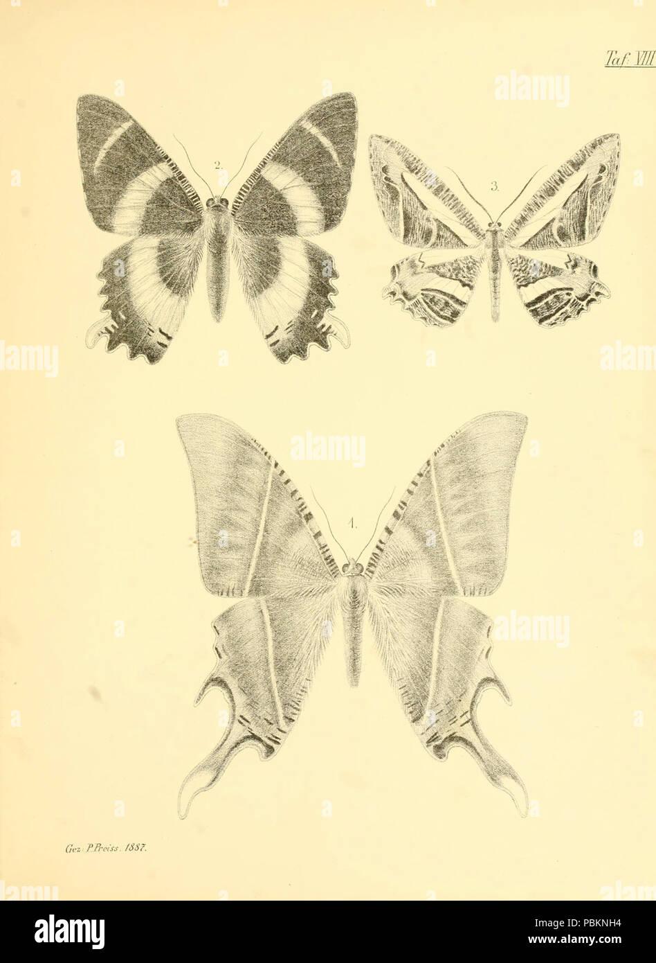 Abbildungen hervorragender Nachtschmetterlinge aus dem indo-australischen und südamerikanischen Faunengebiet (Taf. VIII) - Stock Image