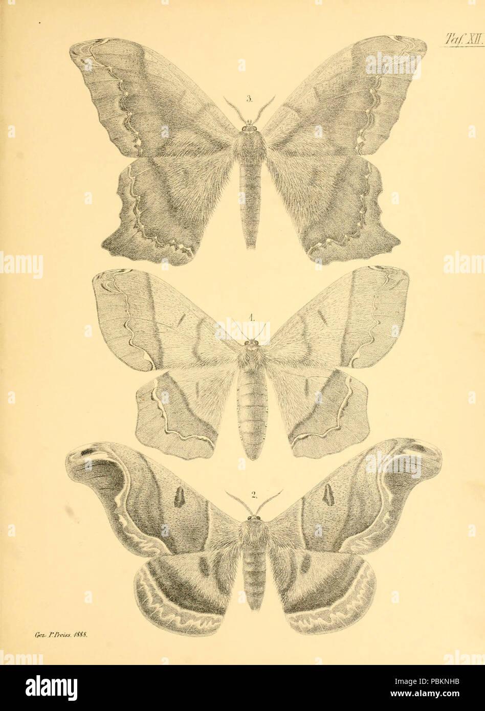 Abbildungen hervorragender Nachtschmetterlinge aus dem indo-australischen und südamerikanischen Faunengebiet (Taf. XII) - Stock Image