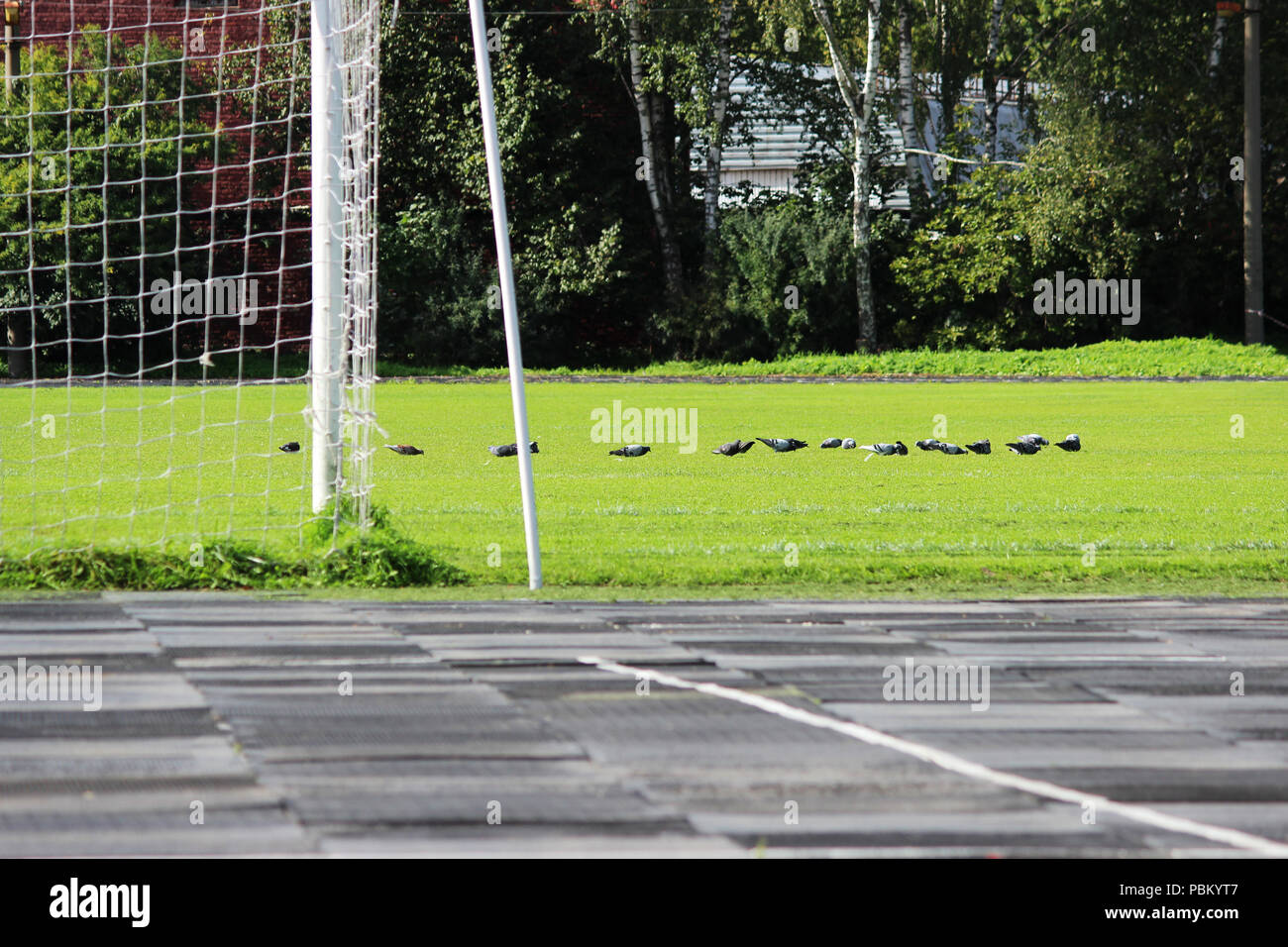 stadium: a treadmill with rubber plates and a football field with a goalkeeper's goal and a flock of pigeons that walk on real green grass. - Stock Image