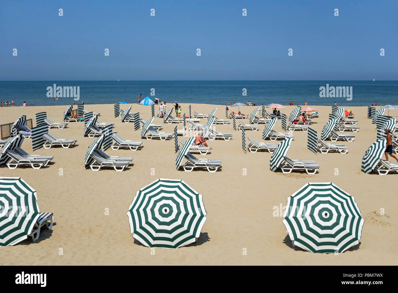 Mostly empty reclining seats / beach chairs and parasols at Belgian seaside resort due to heatwave during summer holidays along the North Sea coast - Stock Image