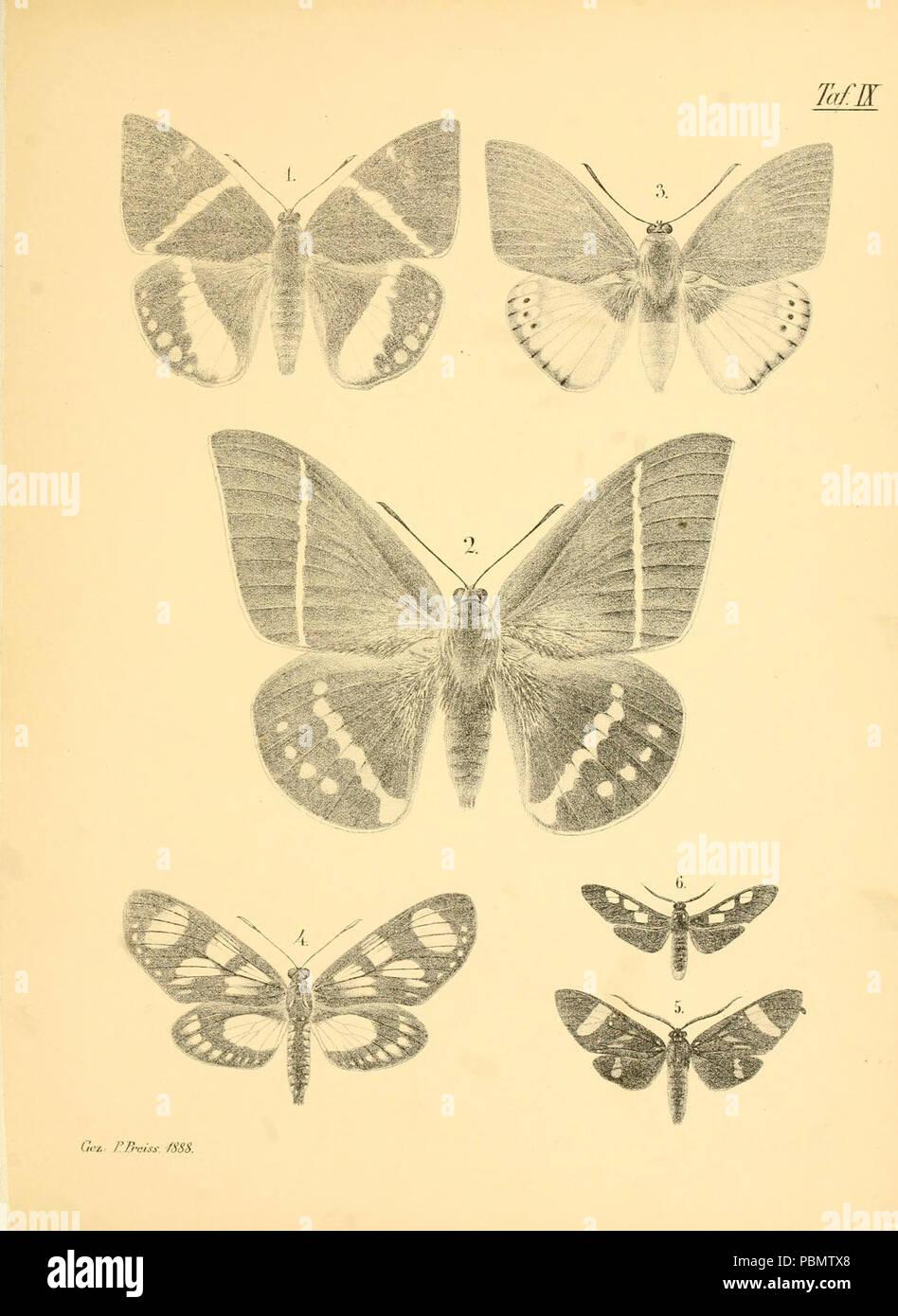 Abbildungen hervorragender Nachtschmetterlinge aus dem indo-australischen und südamerikanischen Faunengebiet (Taf. IX) - Stock Image