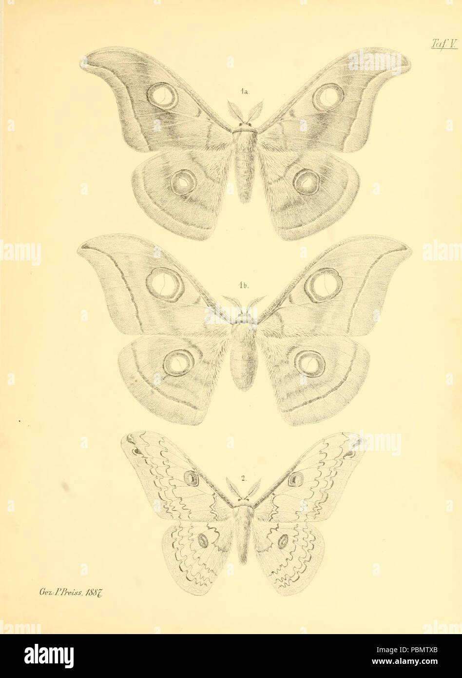 Abbildungen hervorragender Nachtschmetterlinge aus dem indo-australischen und südamerikanischen Faunengebiet (Taf. V) - Stock Image