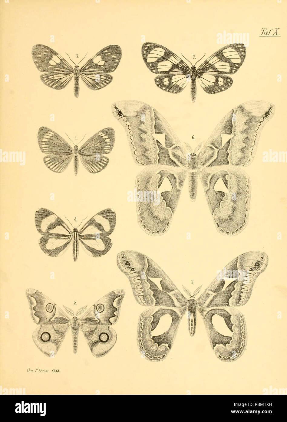 Abbildungen hervorragender Nachtschmetterlinge aus dem indo-australischen und südamerikanischen Faunengebiet (Taf. X) - Stock Image