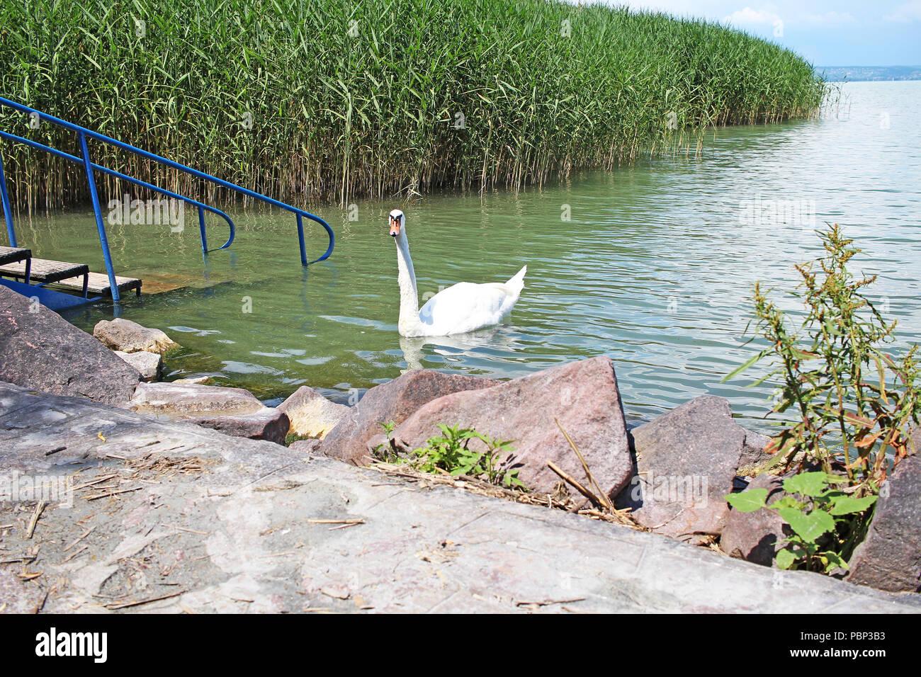 Hungary Balaton Tihany european lake 2018 Hungarian summer. sunny day. - Stock Image