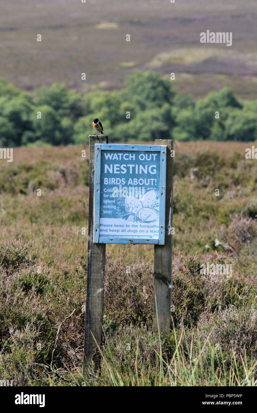 Stonechat on a sign warning of dogs disturbing nesting birds - Stock Image