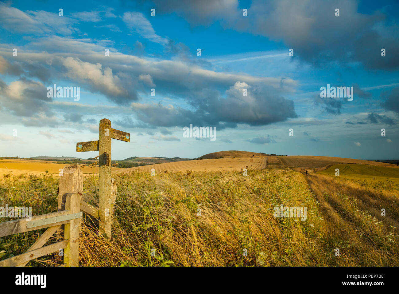 Summer evening on the South Downs in West Sussex, England. - Stock Image