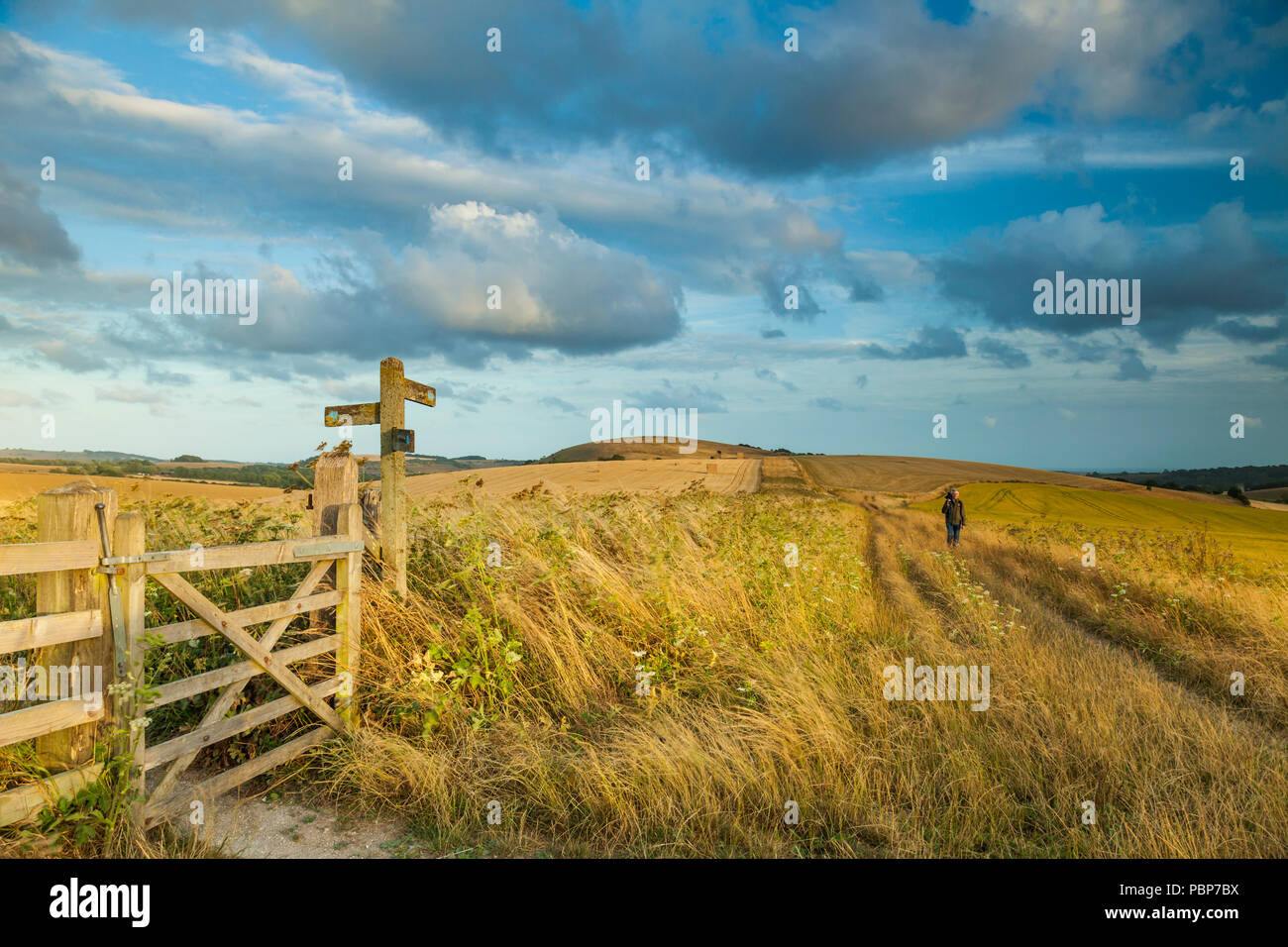Summer evening in South Downs National Park, West Sussex, England. - Stock Image