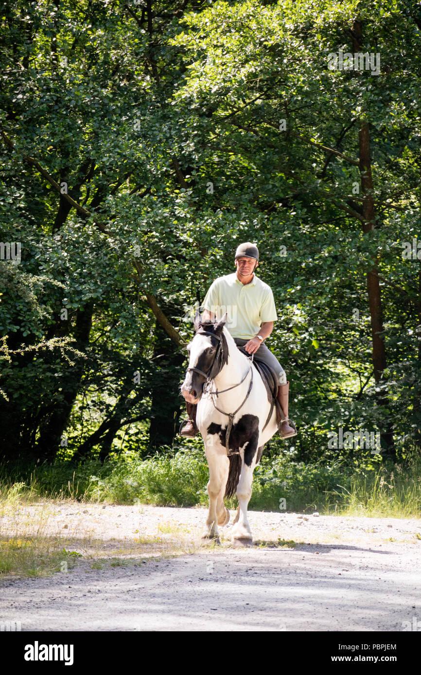 Man on horseback on a woodland trail, England, UK - Stock Image