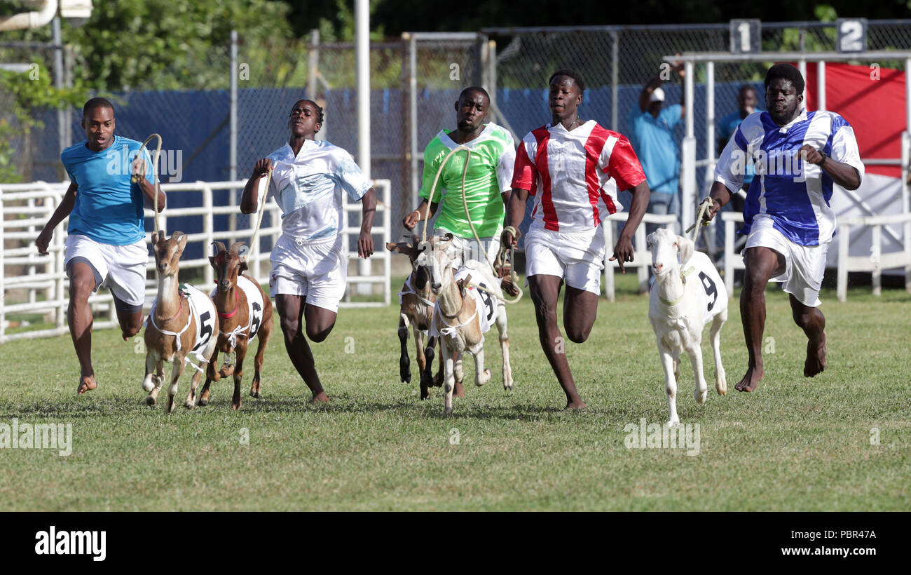 Goat handlers, known as jockeys, race to the finish line with their animals during goat racing at the annual Tobago Heritage Festival, at Buccoo Integrated Facility, in Tobago island, Trinidad and Tobago, 29 July 2018. EFE/Andrea De Silva - Stock Image