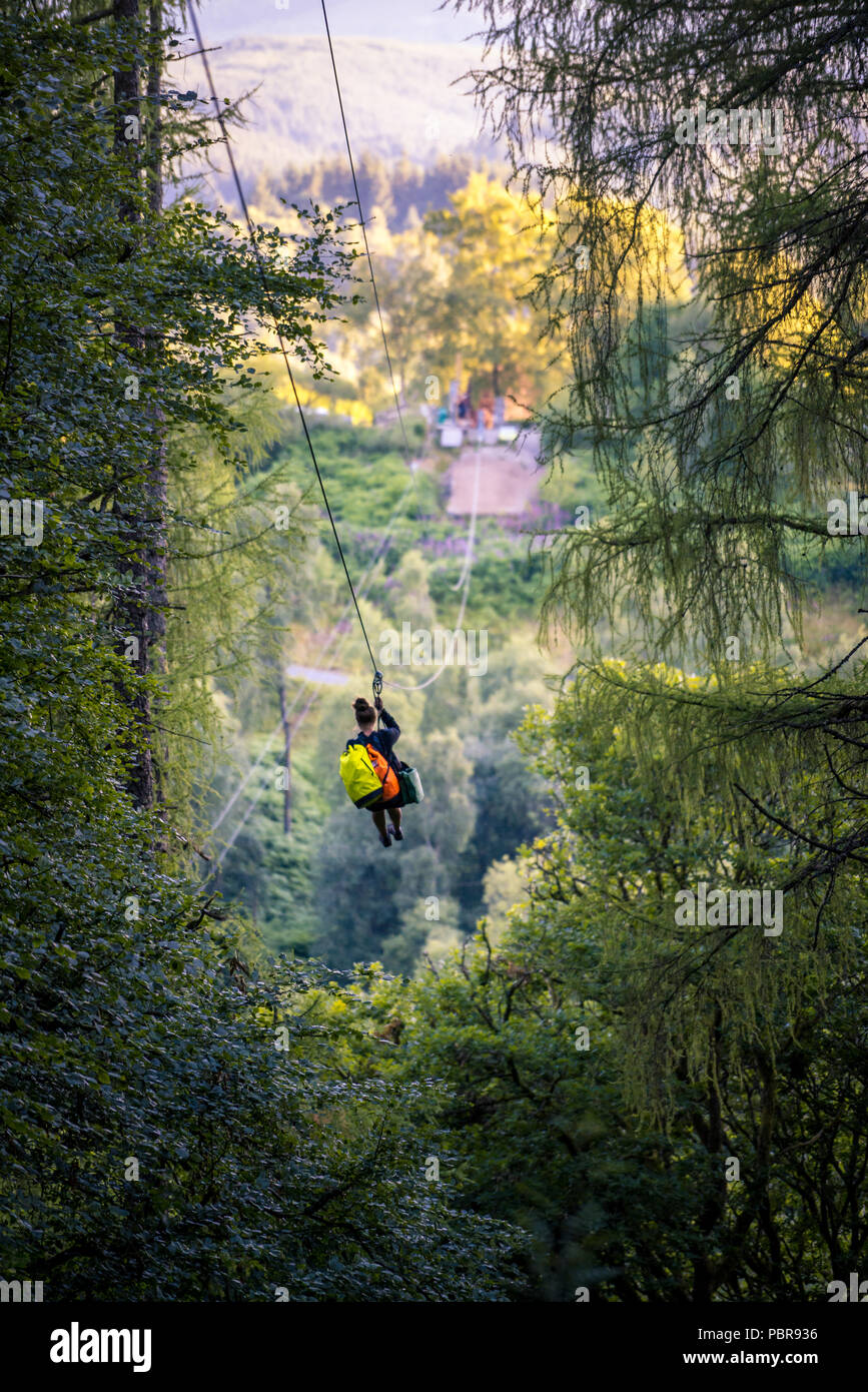 Go Ape High Resolution Stock Photography And Images Alamy