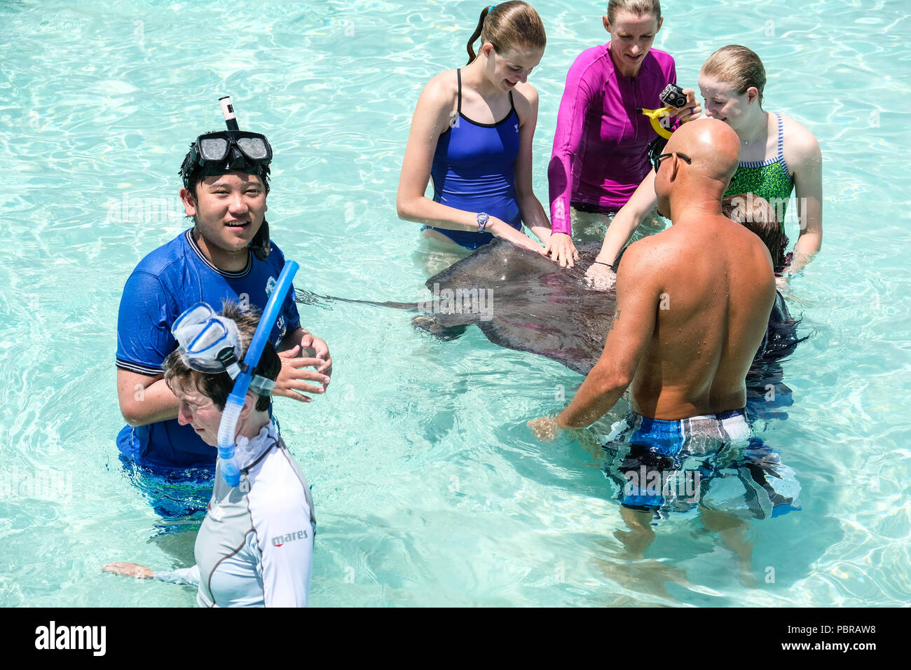 Tourists at Stingray City off Grand Cayman Island - Stock Image