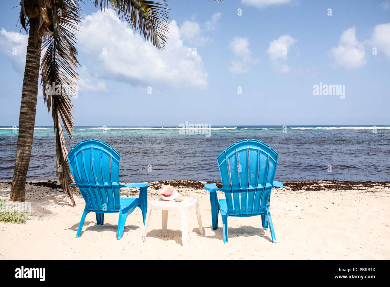 Two blue chair on beach facing masses of seaweeds washed up on beaches at Cayman Island - Stock Image