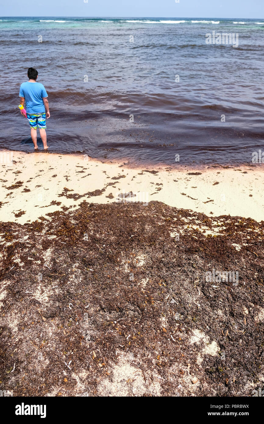 A boy looks at masses of seaweeds washed up on beaches at Cayman Island - Stock Image