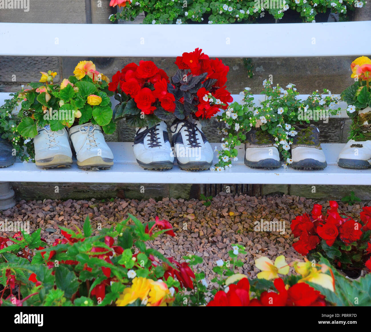 Row of famous golfers shoes used as flower pots displaying a variety of potted flowering plants  in St Andrews,  Scotland - Stock Image