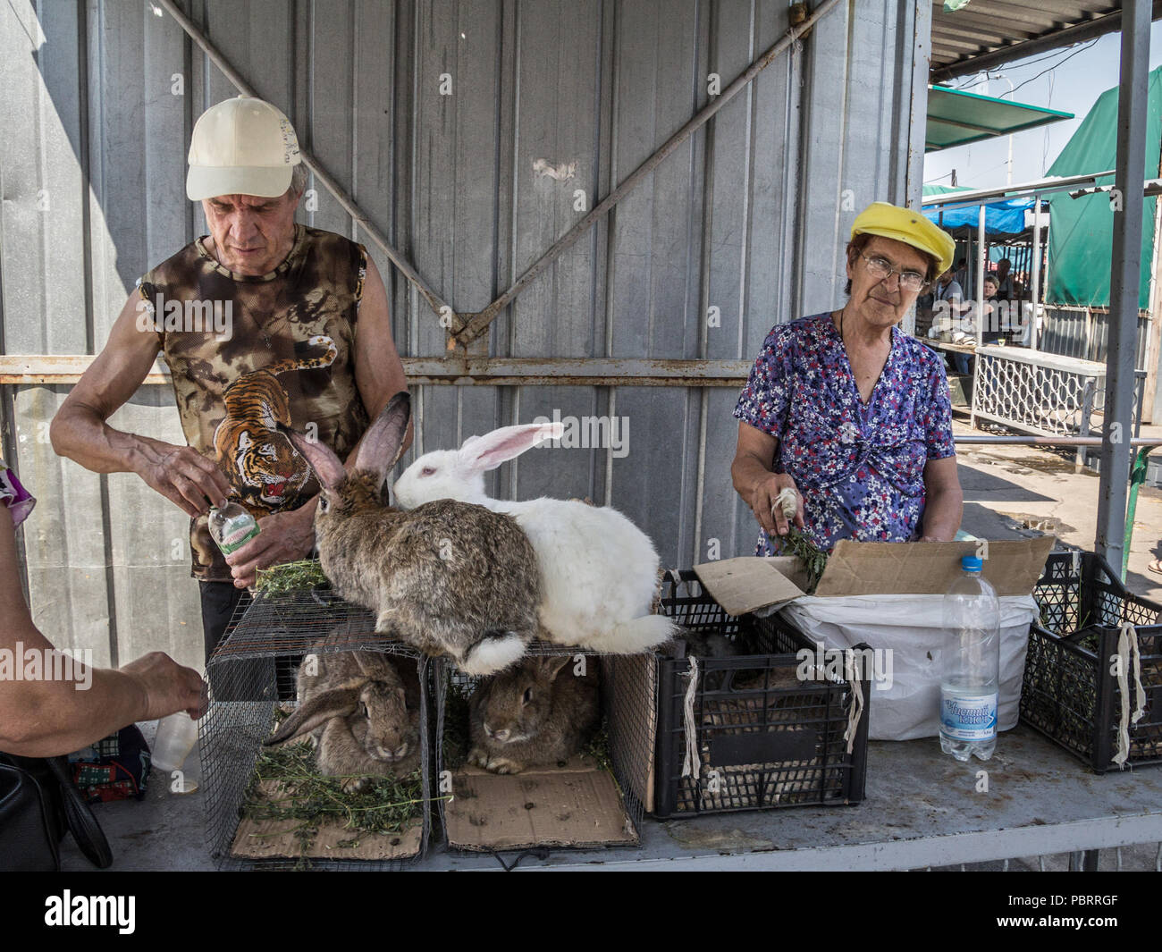DNIPROPETROVSK, UKRAINE - AUGUST 15, 2018: Old people selling living rabbits in cages on Dniepropetrovsk main market, slaviansky, during a warm aftern Stock Photo
