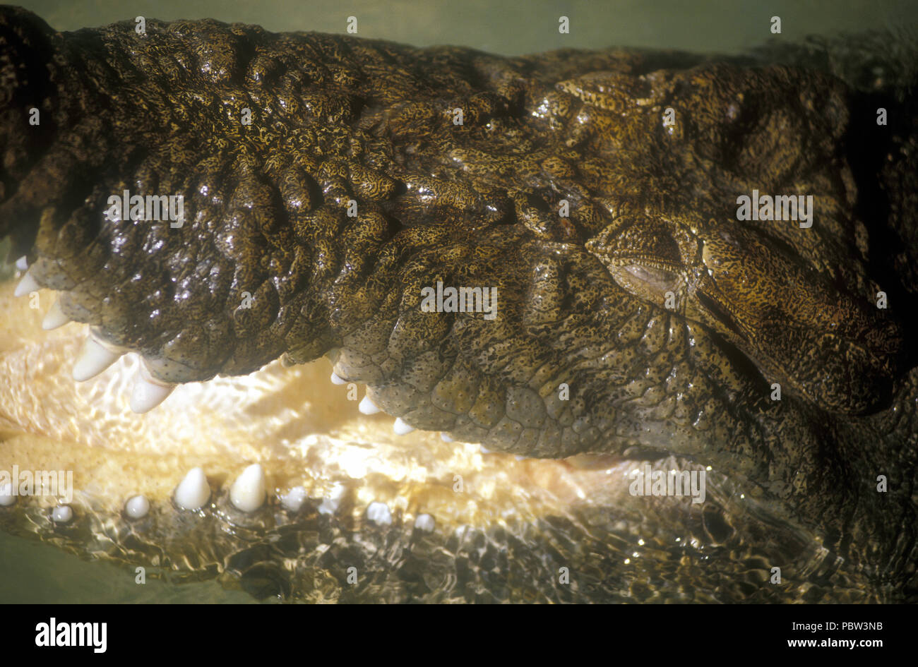 CLOSE-UP OF THE EYE AND JAW OF A SALTWATER CROCODILE (CROCODYLUS POROSUS) KAKADU NATIONAL PARK, NORTHERN TERRITORY, AUSTRALIA Stock Photo