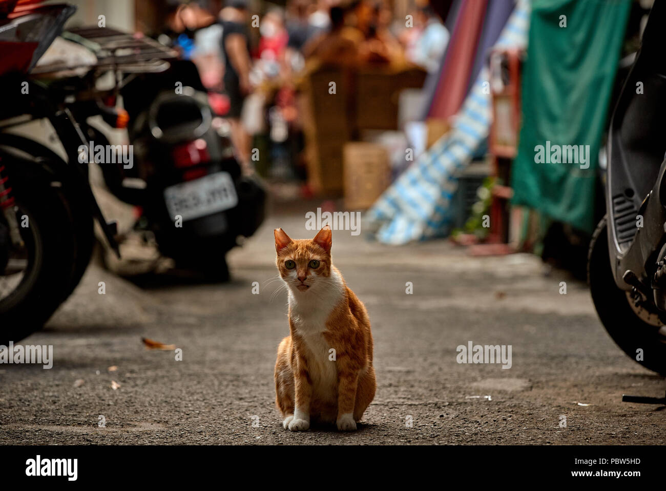 Sick free cat sitting on the road with asian street market stands on the background - Stock Image