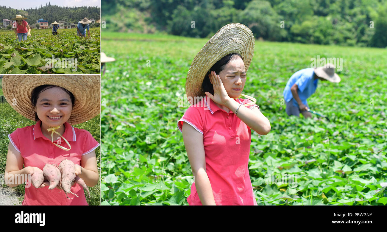 (180730) -- RONGSHUI, July 30, 2018 (Xinhua) -- The combined photo taken on July 22, 2018 shows Shi Qiuxiang, a local farmer, working at a sweet potato plantation with villagers in Rongshui Miao Autonomous County, south China's Guangxi Zhuang Autonomous Region. Due to harsh environmental conditions, Rongshui has long been a less developed area in China. Up to now, there are still 76,800 impoverished people living in the county. In recent years, the local government carries out effective methods for poverty alleviation, helping local people to build roads, repair houses, improve education and d - Stock Image
