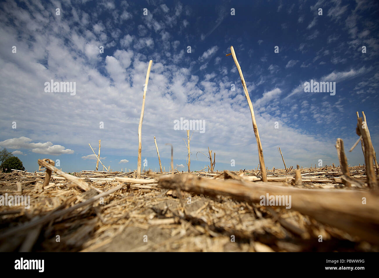 27.07.2018, Germany, Cologne: Dried-up stalks tower into the sky on a harvested field near Cologne. The persistent drought is causing farmers considerable problems.  The hot and dry weather bothers the farmers and leads to crop failures. Photo: Oliver Berg/dpa - Stock Image