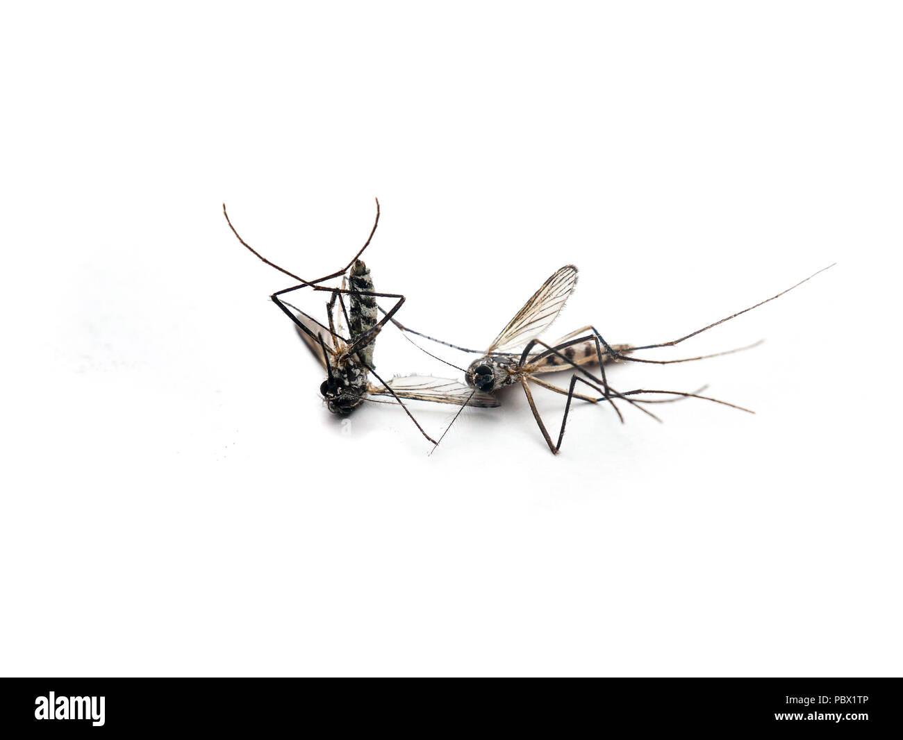 How dangerous is the Zika virus?