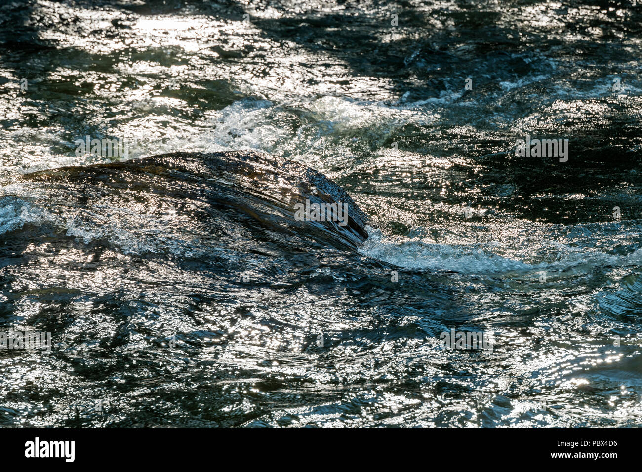 Close-up of backlit Arkansas River which runs through the downtown historic district of the small mountain town of Salida, Colorado, USA - Stock Image