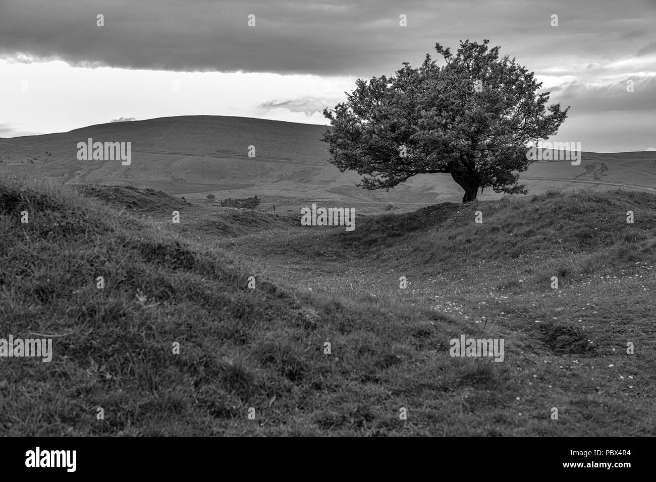 Lone tree on Grin Low, above Buxton, Derbyshire, England, UK. Black and white version - Stock Image