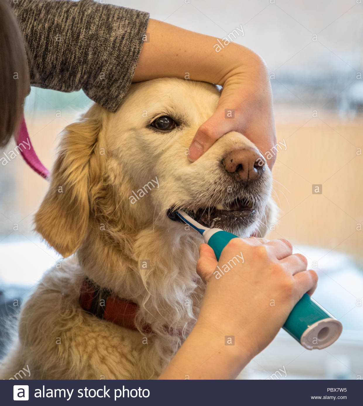 How to brush teeth dog Ultrasonic cleaning of teeth: reviews 16