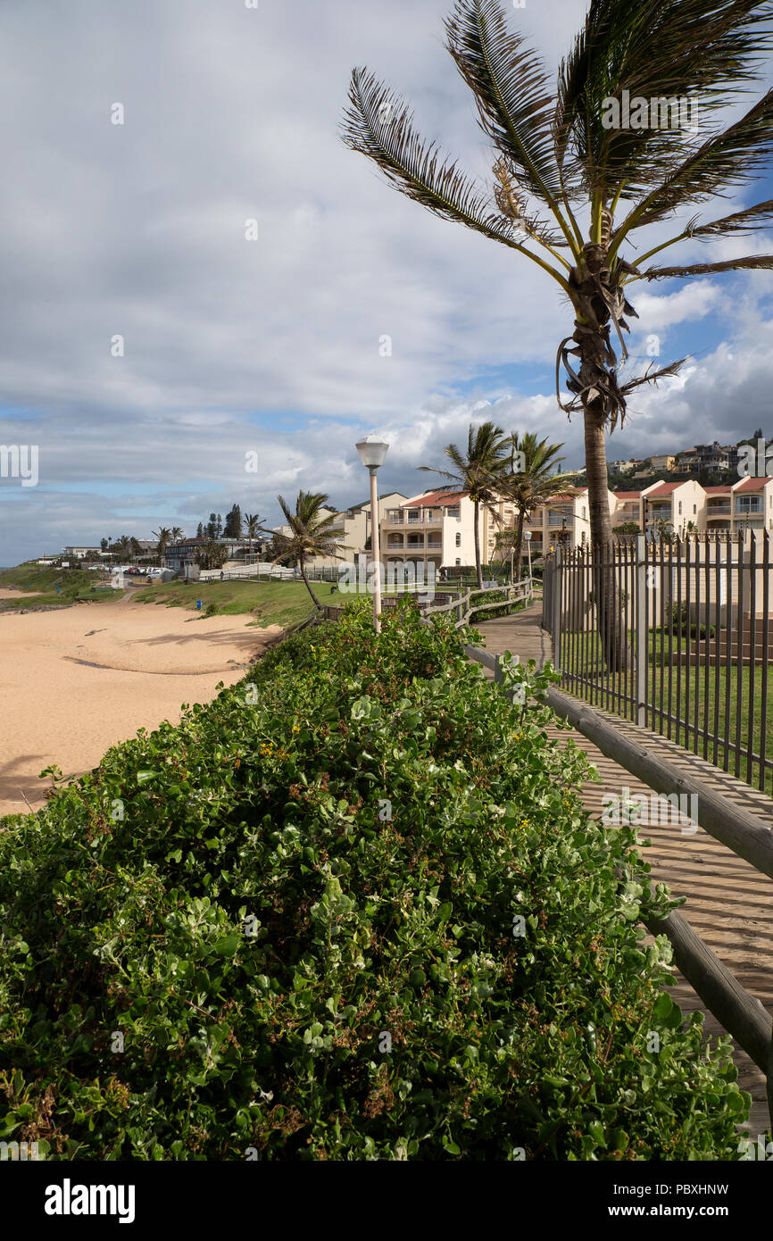 Palm tree hedges and coastal boardwalk above the sandy beach at Ballito a holiday town located in KwaZulu-Natal, South Africa - Stock Image