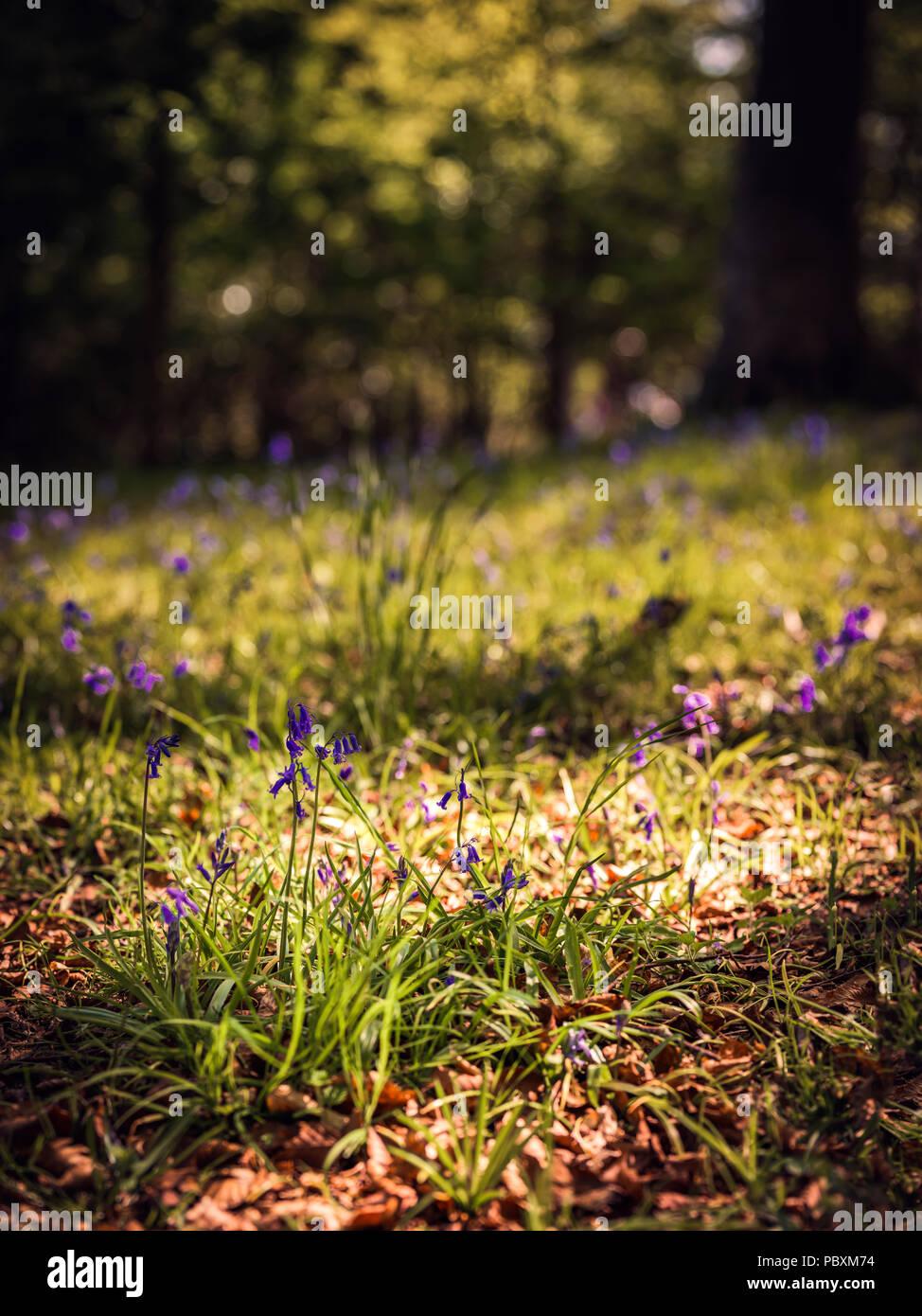 Garden Centre: Spring Flowers Scotland Stock Photos & Spring Flowers