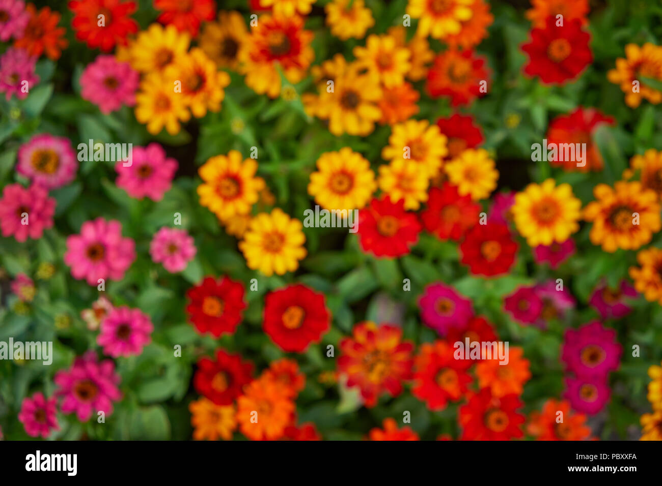 Bright colored flowers on a green lawn for background good mood on a ...