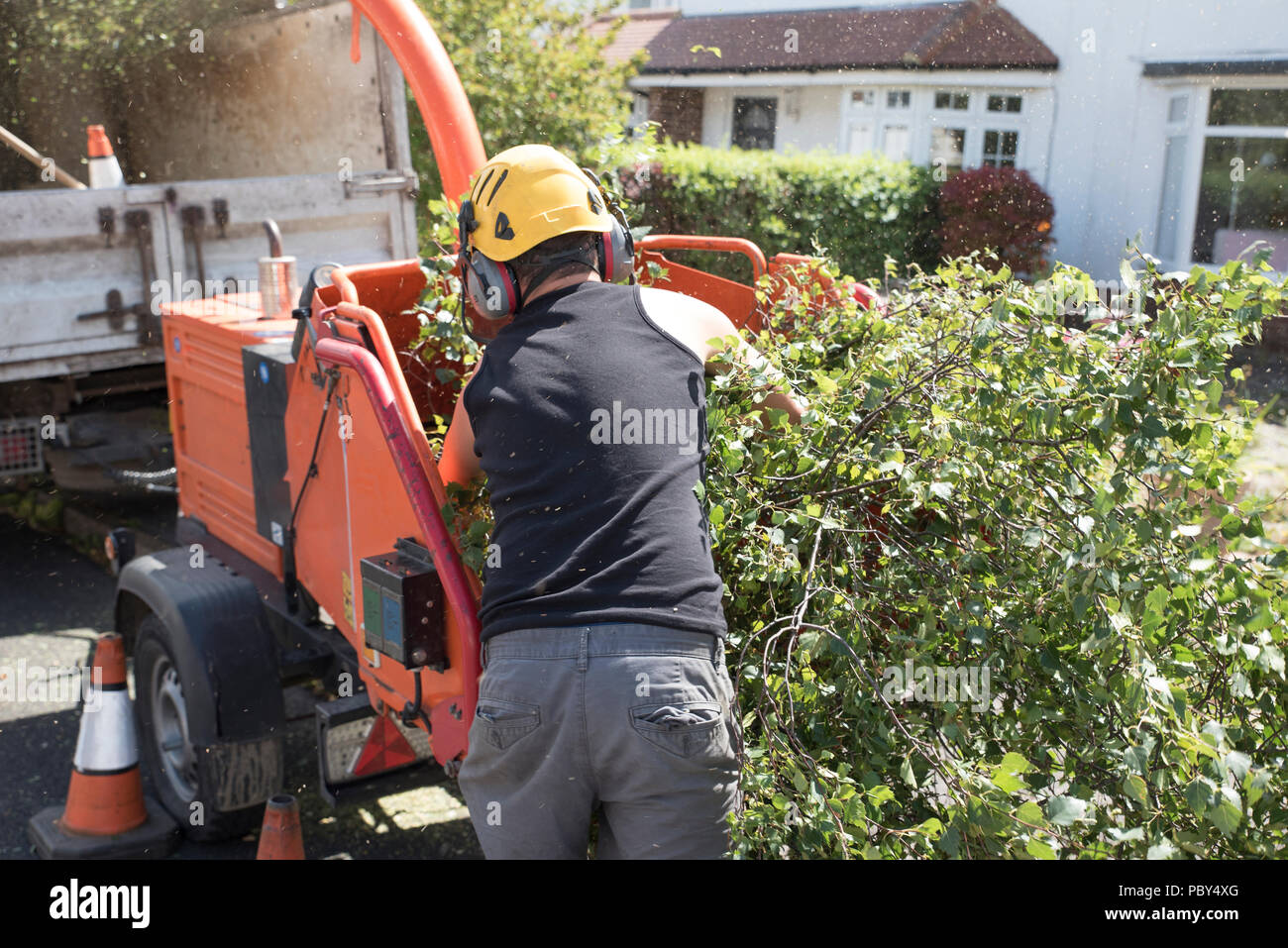 Male operative loading branches into an industrial wood chipping machine - Stock Image
