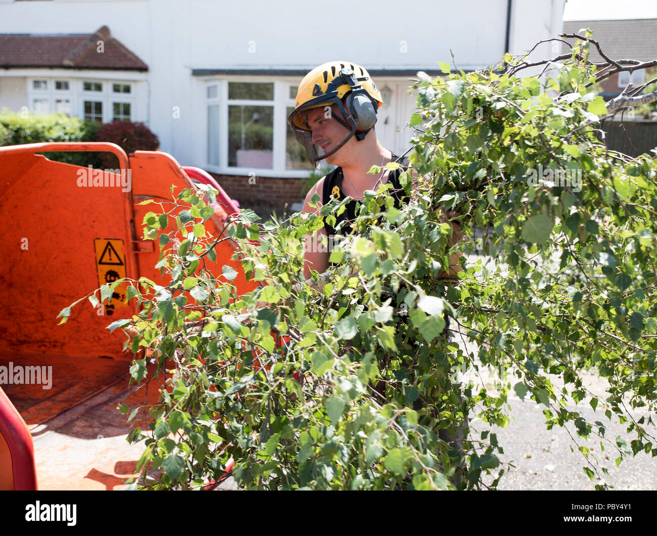 Loading small branches into a wood shredding machine - Stock Image