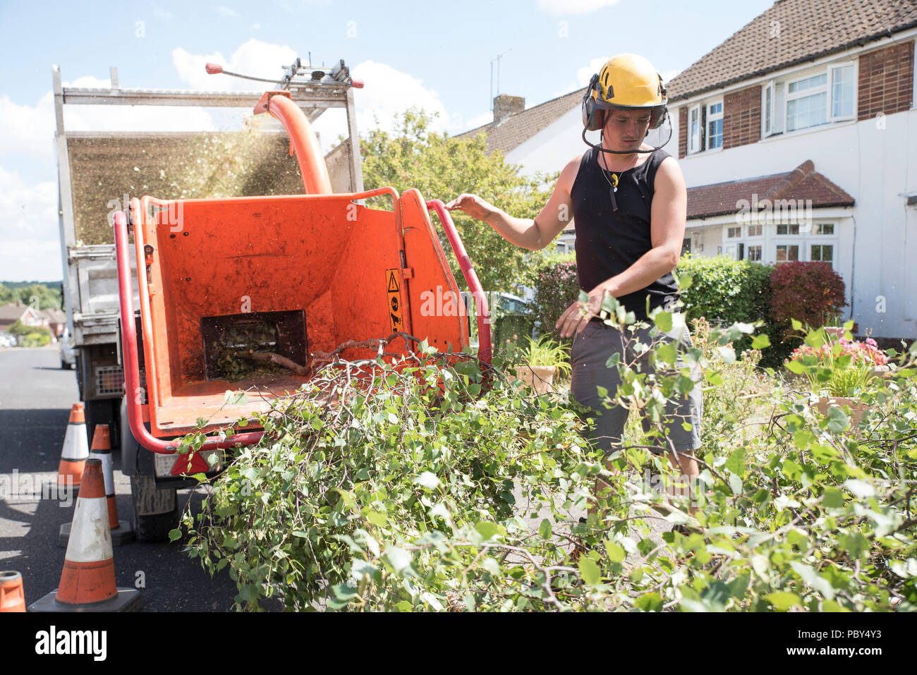 A tree surgeon feeding branches into a wood chipper - Stock Image